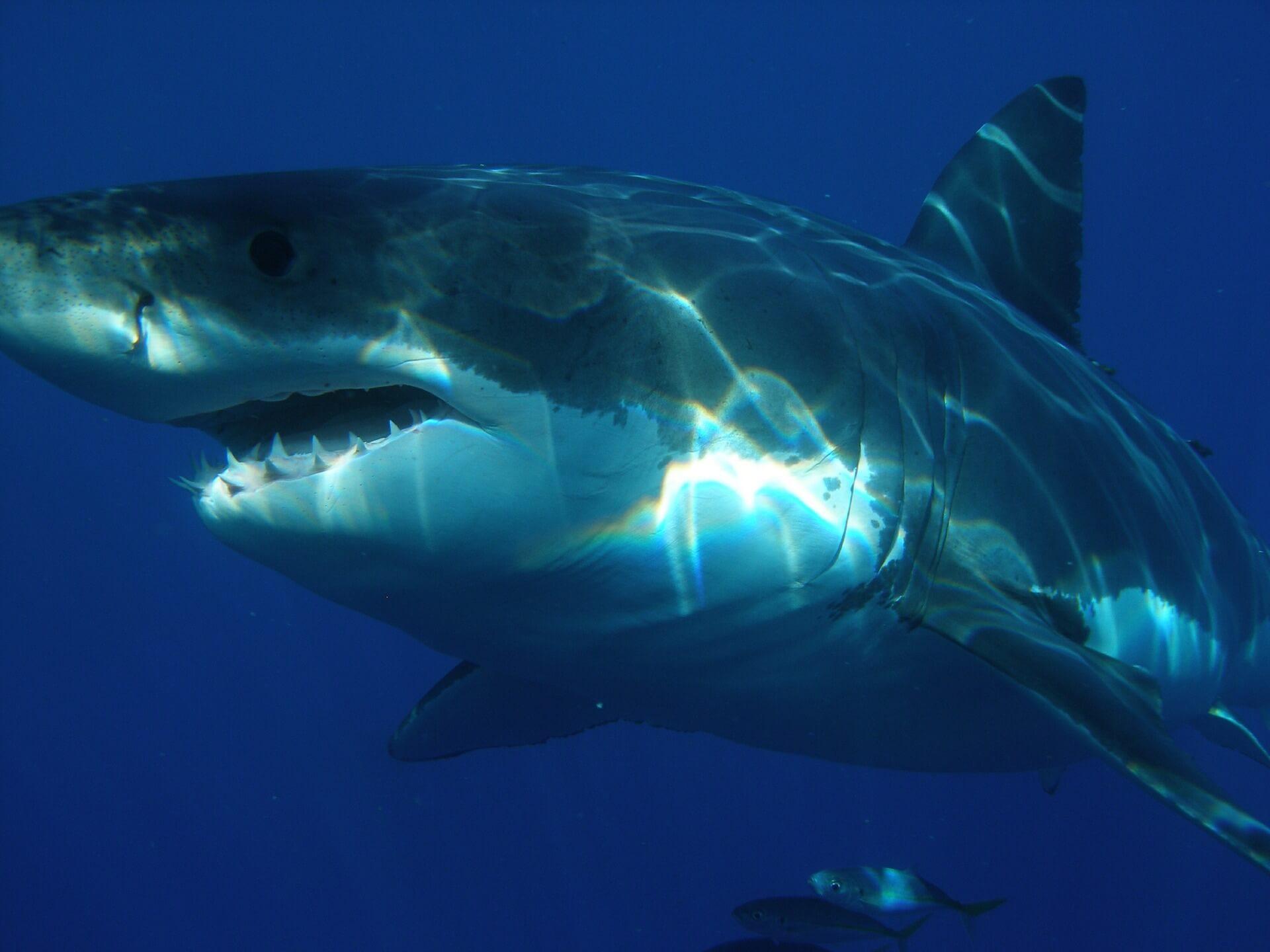 Boy Loses Fish to Shark