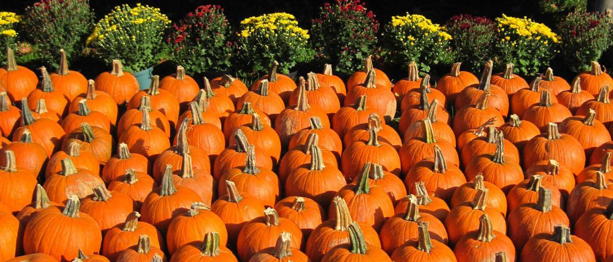 The Caledonia Pumpkin Fest This Weekend